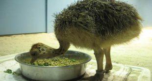 انواع خوراک شترمرغ