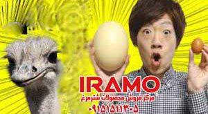 تخم شترمرغ قیمت