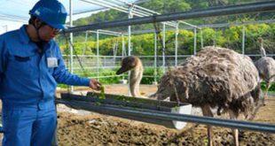 قیمت روز خوراک شترمرغ