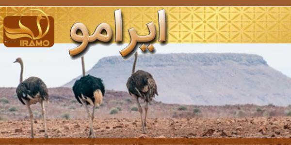 پرورش شترمرغ در ایران