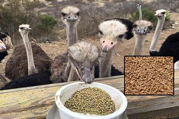 فروش خوراک آماده شترمرغ