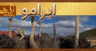 قیمت شترمرغ مولد در مشهد