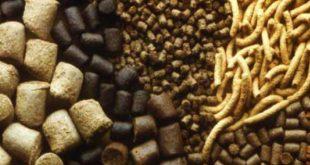 صادرات انواع خوراک شترمرغ