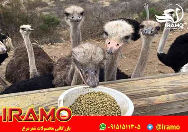 قیمت روز شترمرغ مولد تخم گذار