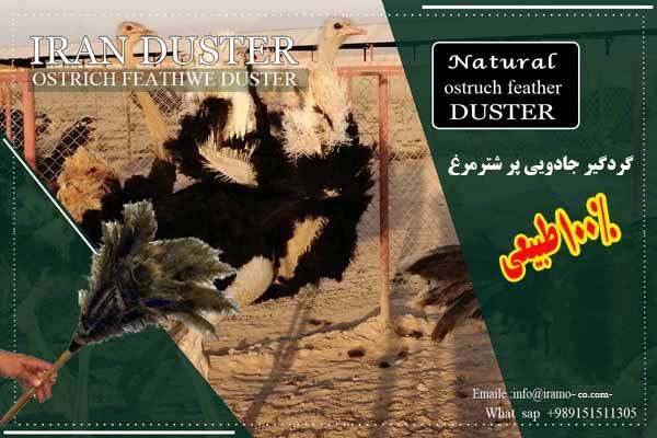 قیمت گردگیر شترمرغ