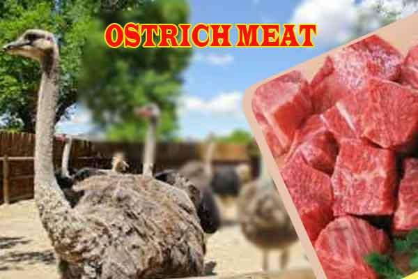 خرید گوشت شترمرغ در تهران