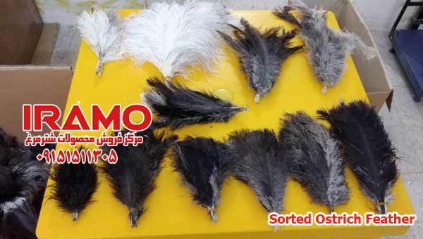 فروش پر شترمرغ برای صادرات